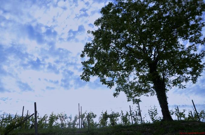 Primavera in Piemonte:  tra feste del vino, castelli, artigianato e vecchie tradizioni