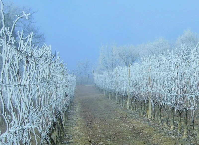 Monferrato wines: from the plant to the glass
