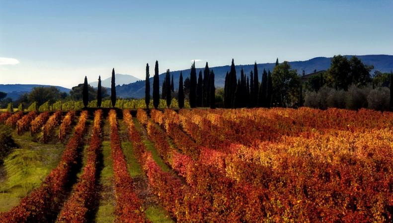 History, colours and tastes of Tuscany Enogastronomia Folclore Sagre Giochi storici