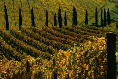 Strolling among villages and noble vineyards of Tuscany, discovering taste and traditions of the past Enogastronomia Folclore Sagre Giochi storici